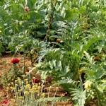 Le potage et jardin aromatique